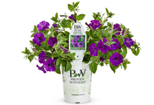 4.25 Proven Winners Supertunia Indigo Charm